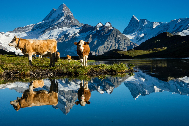 Bachalpsee Reflecion - Grindelwald