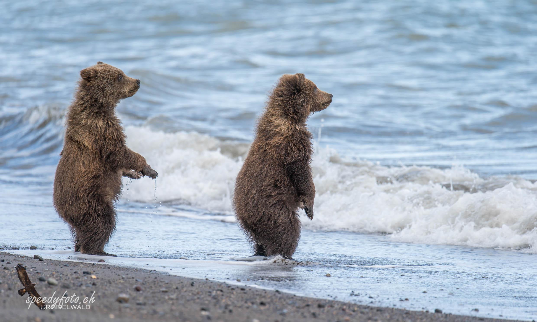 Bears - hey mom!
