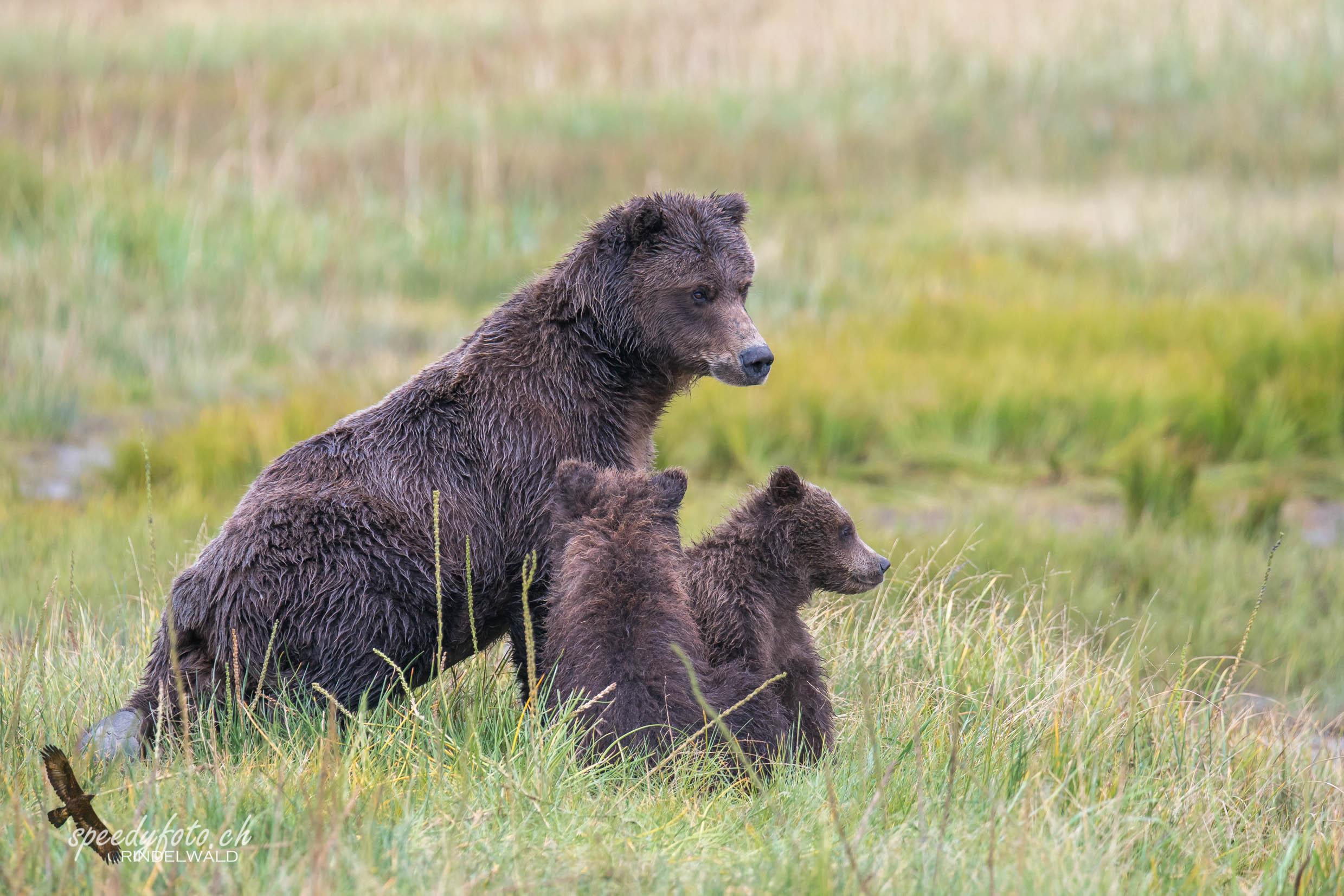 Bears Mothercare