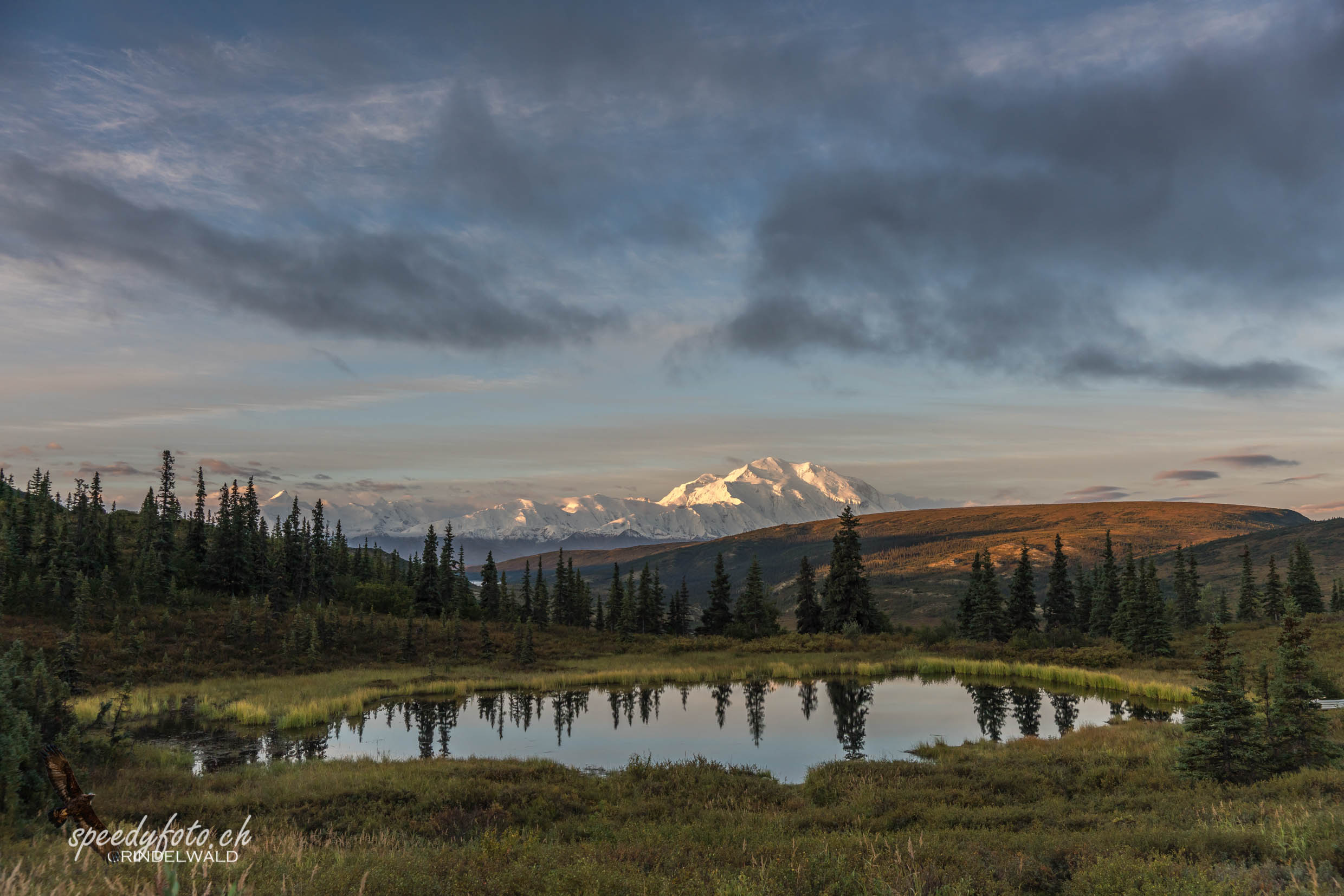 Denali Morning