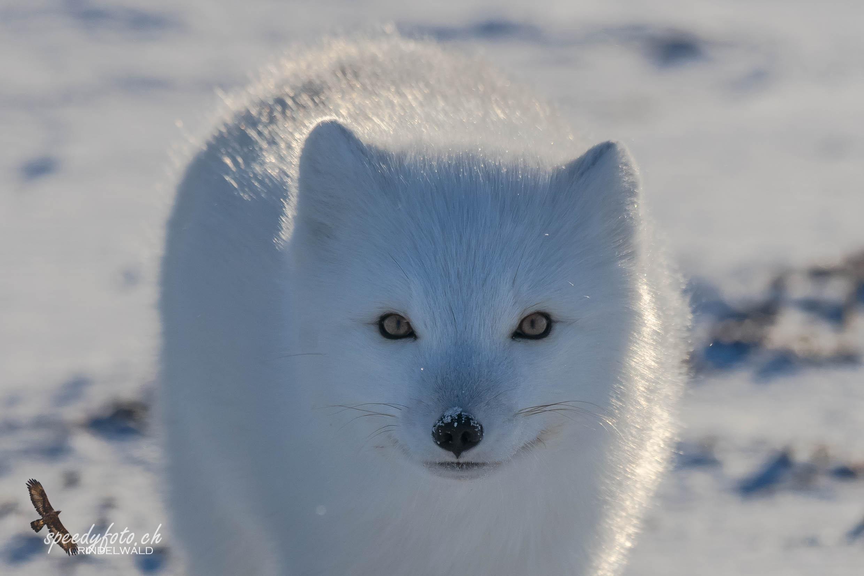 Arctic Canada 2015