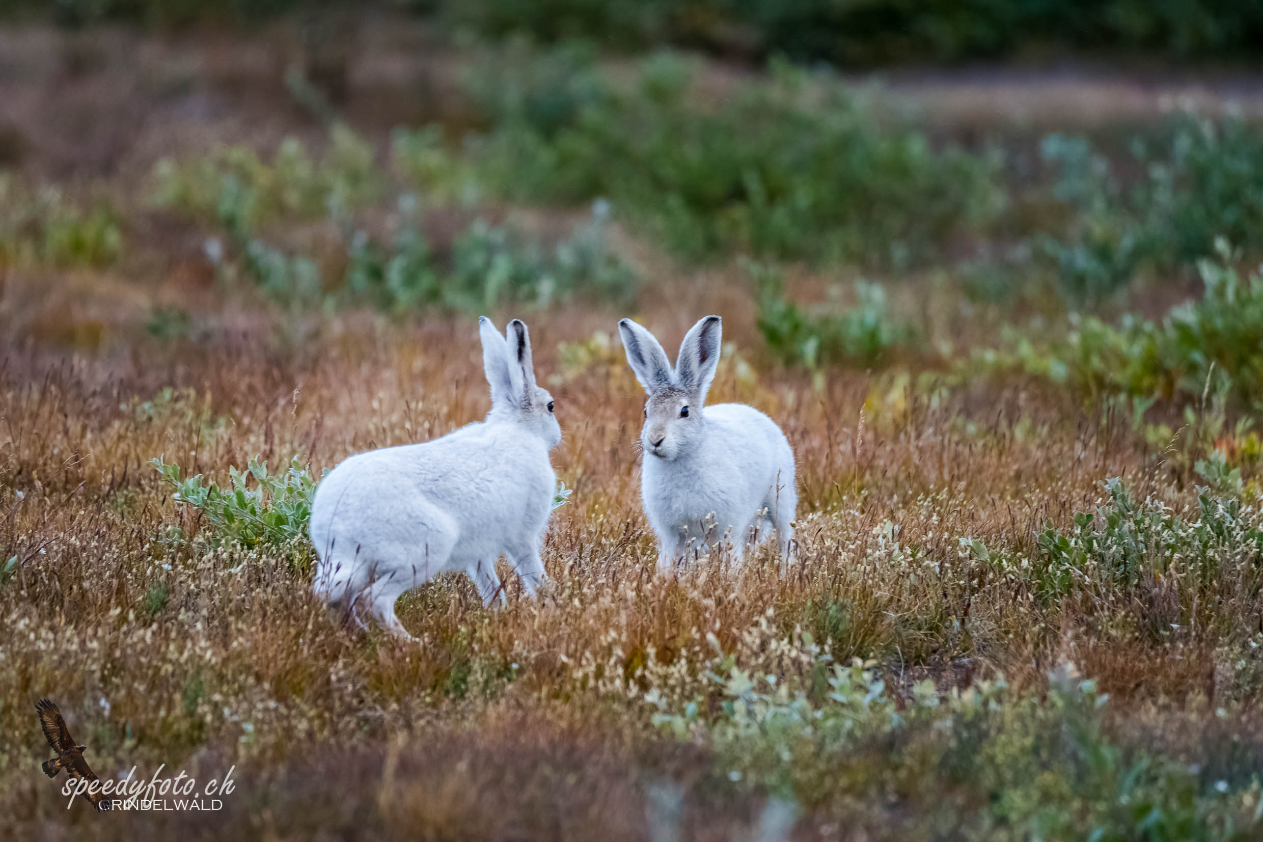 Dancing-Polar-Rabbits