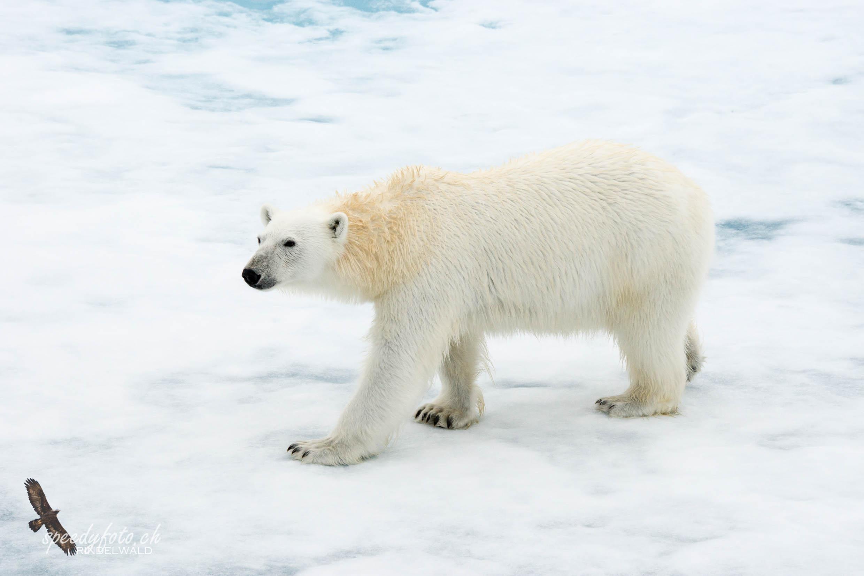 Svalbard 2013/2016