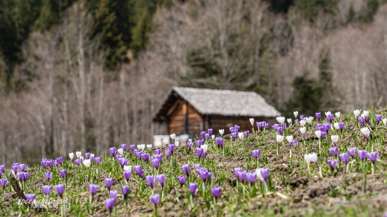 Springtime - Cross Country