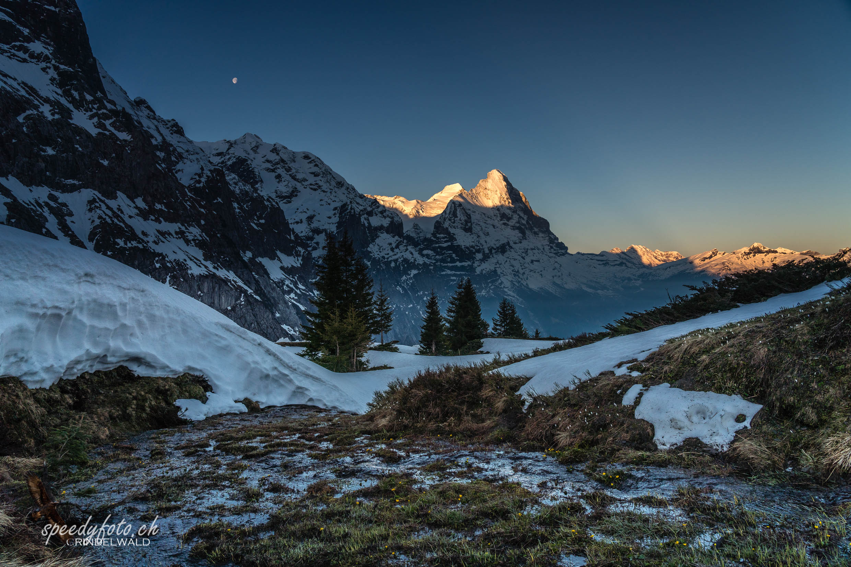 Tagesanbruch Gr Scheidegg - Eiger