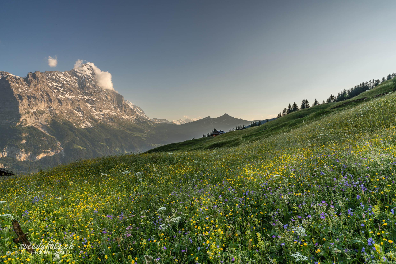 My Land - Grindelwald Eiger