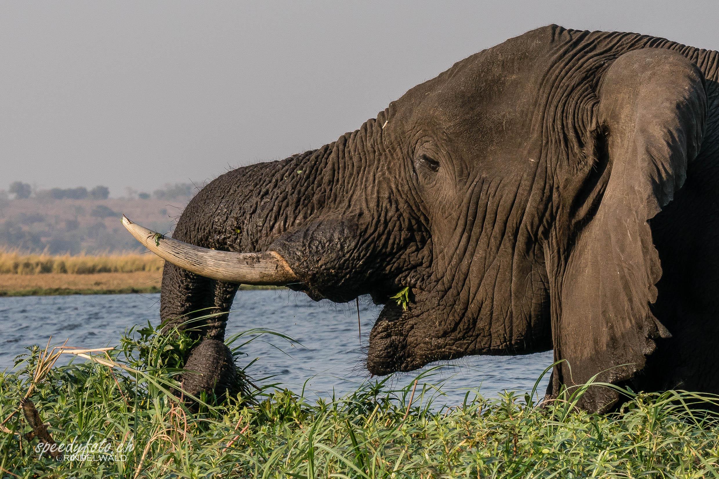 Close to the Elefant