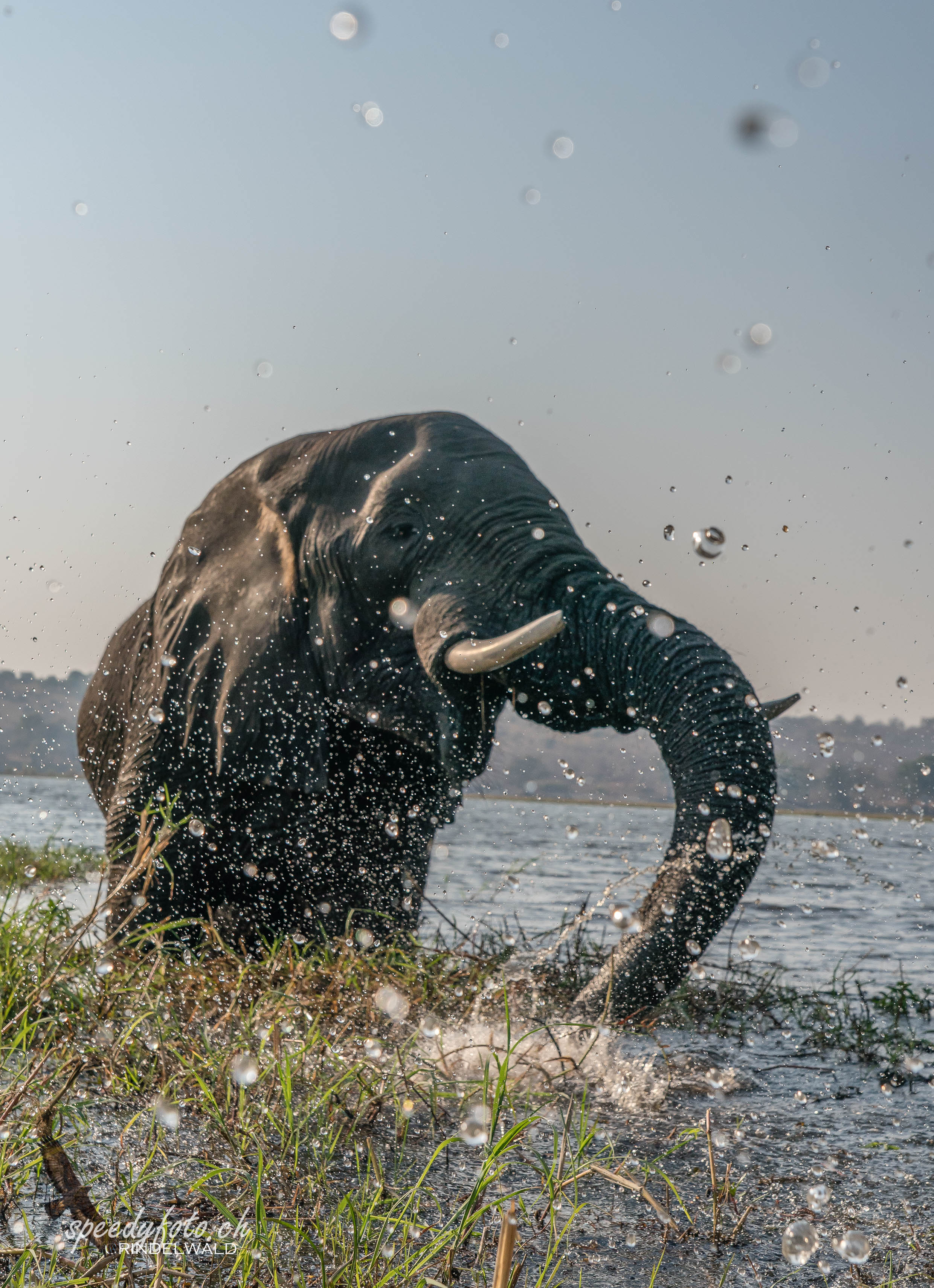 Splashing Elefant