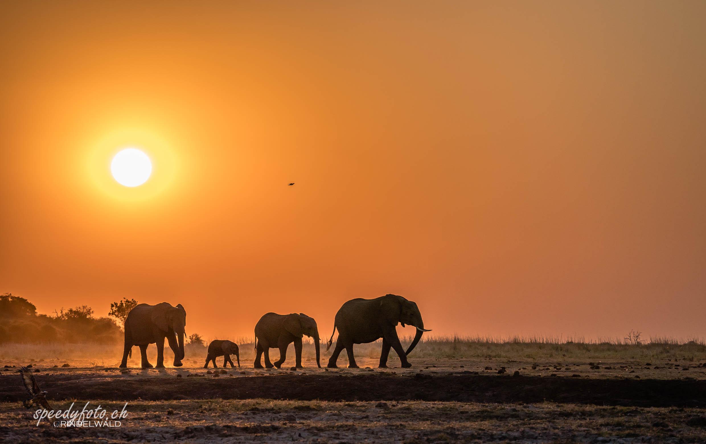 Capture Botswana 2019