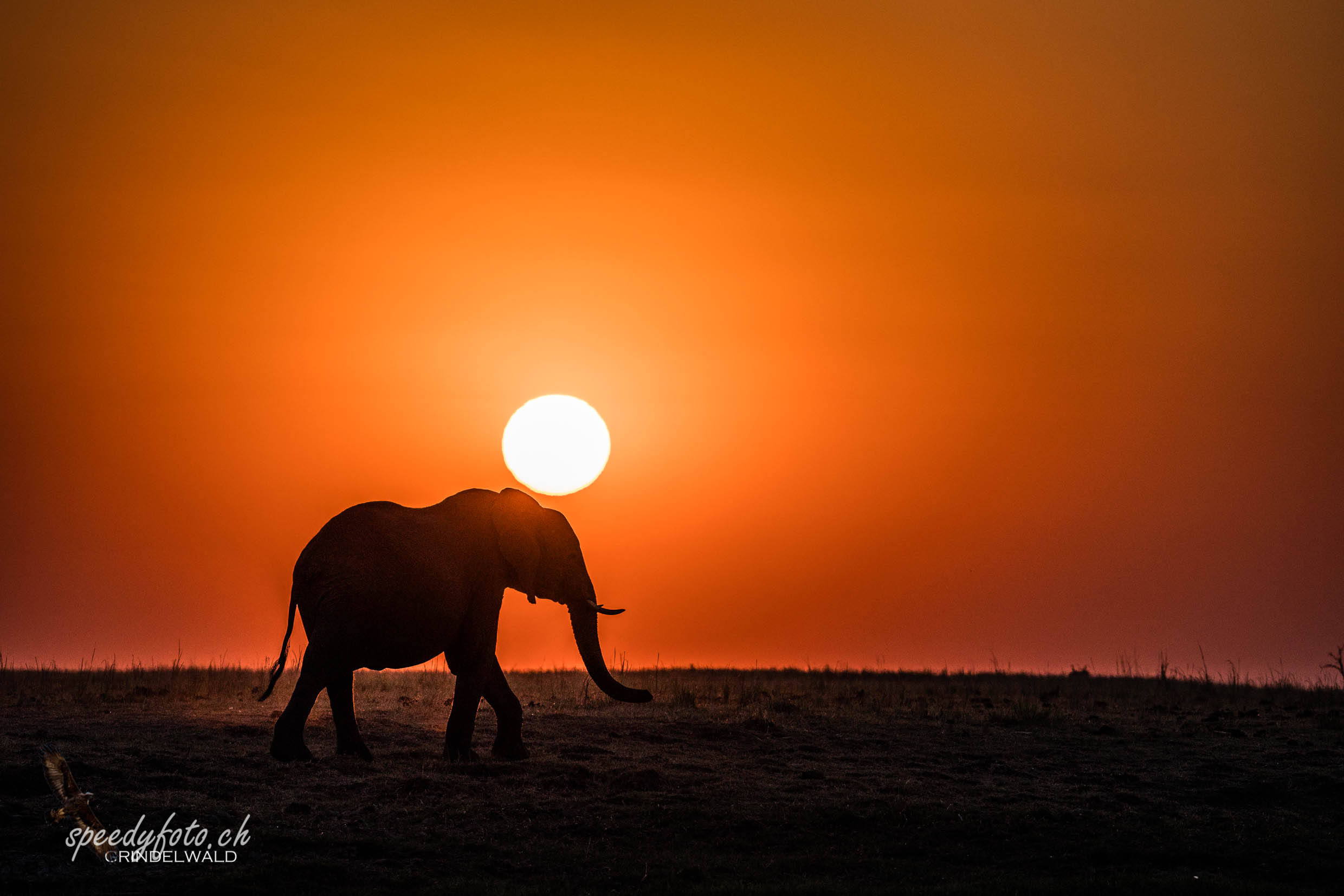 Sunset Elefant