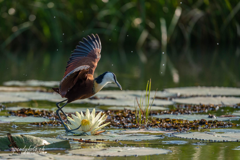 Flower - Water - Bird