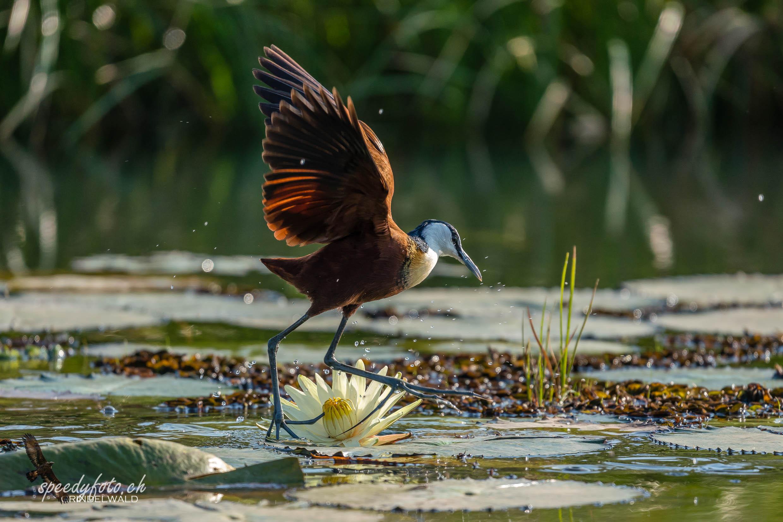 In Motion Birdie