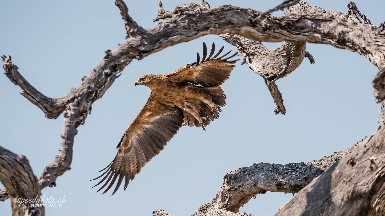 The Eagles Flight