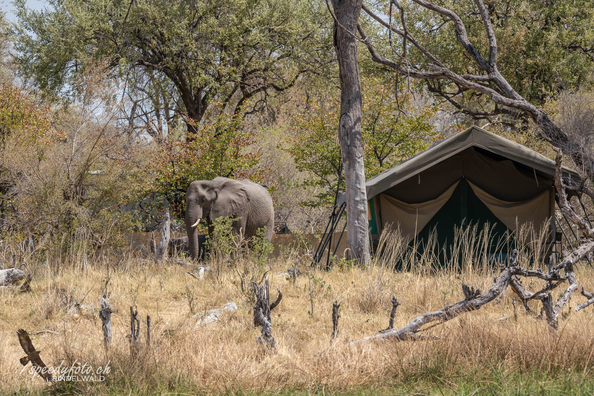 Visitors in our Camp