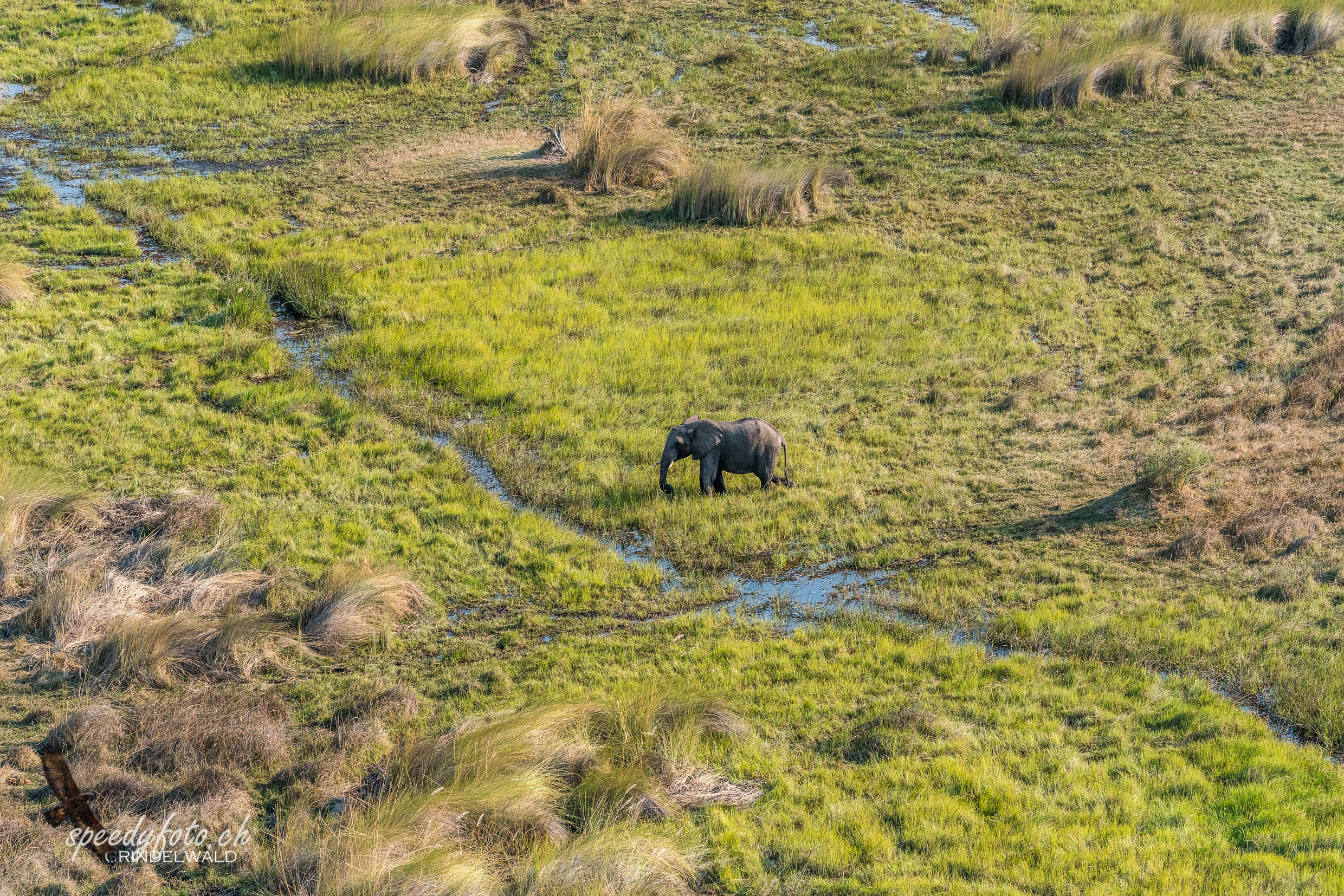 The lonely Elefant - Arial View