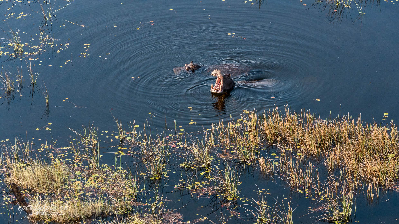 Hyppos - Arial View Okavango Delta