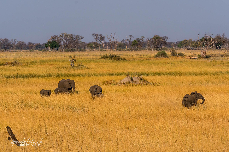 The Elefants - last light