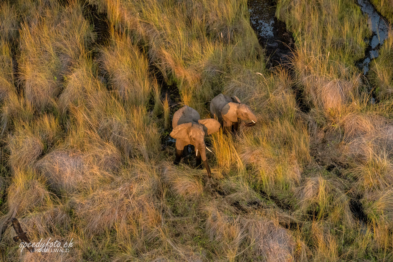 Overflying the Okavango Delta