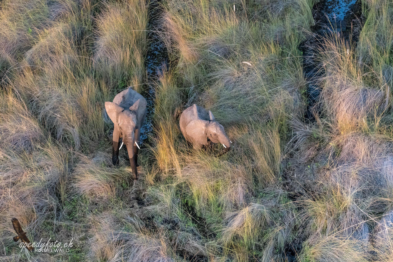 In the Savanna Grass