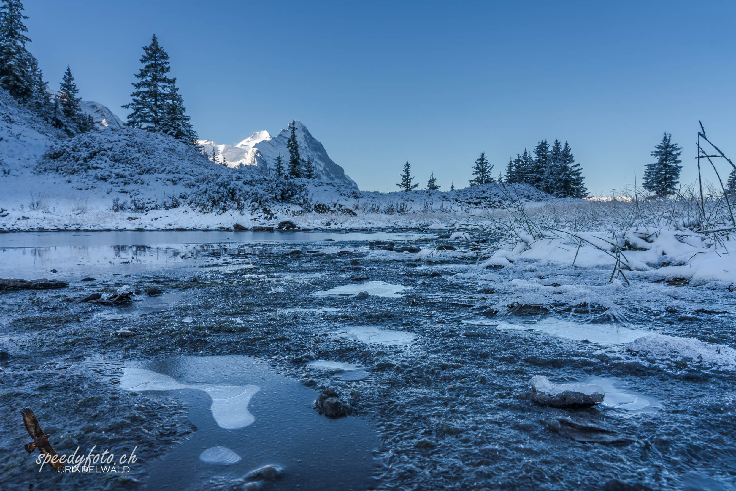 Frosty Morning - Eiger