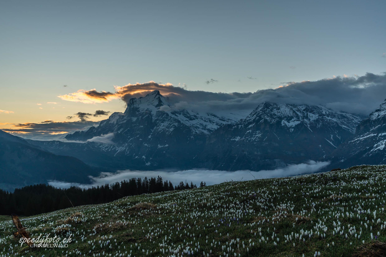 Blaue Stunde - befor sunrise