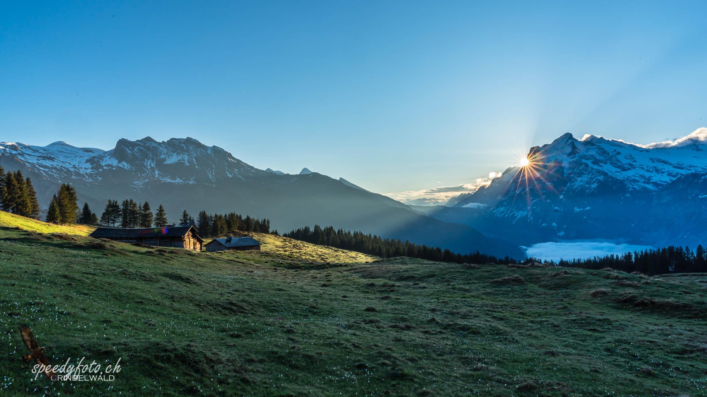 Alpfrieden am Morgen - Grindelwald