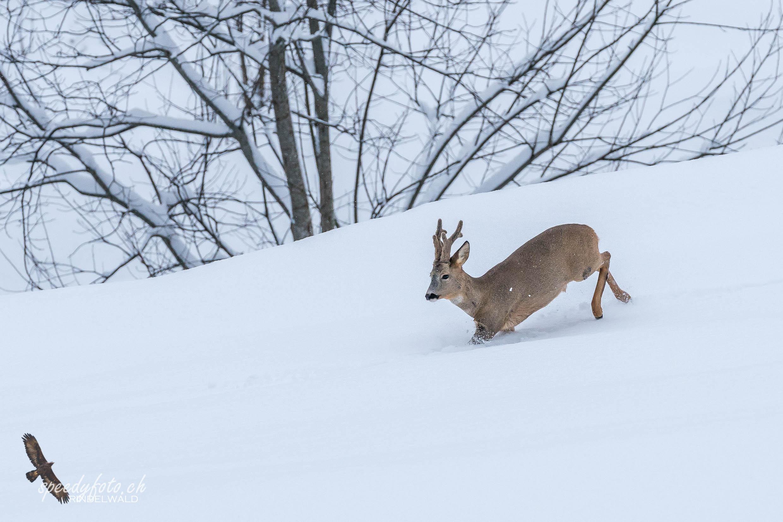 Wintervergnügen Grindelwald