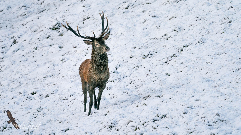 Stolz unterwegs - Wildlife Grindelwald