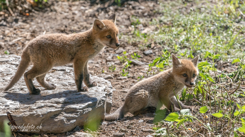 gemeinsamer Ausflug - Fuchswelbpen