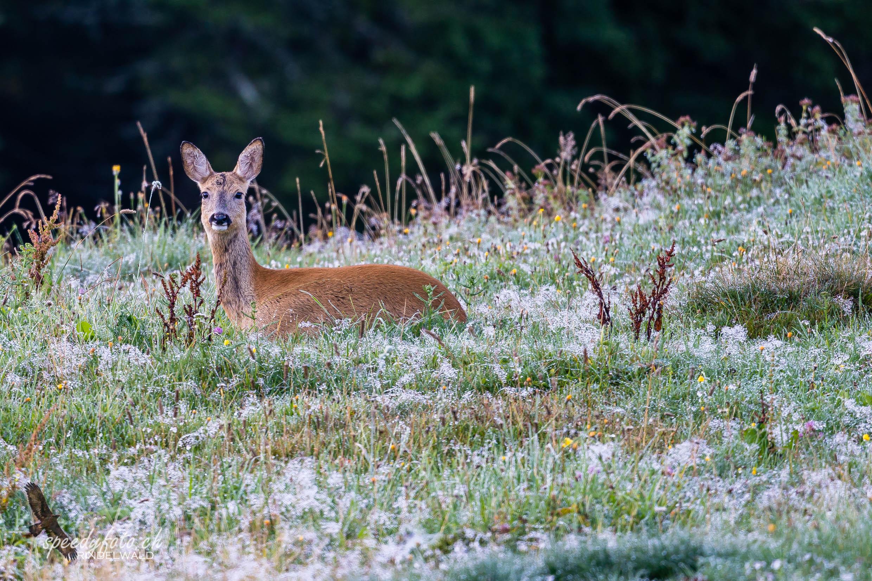 feuchtes Lager - Wildlife Grindelwald