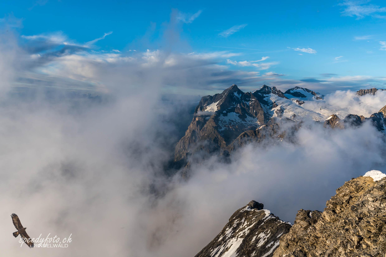 Nebelschönheit - Wetterhorn