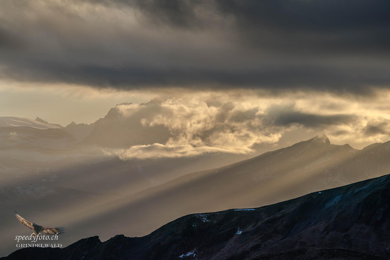 Licht am Horizont - Grindelwald Nature