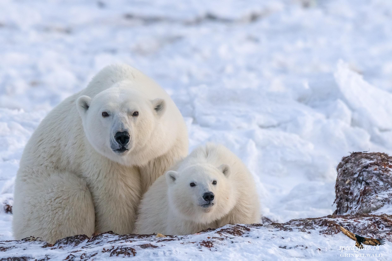 mother & cub - coming close!