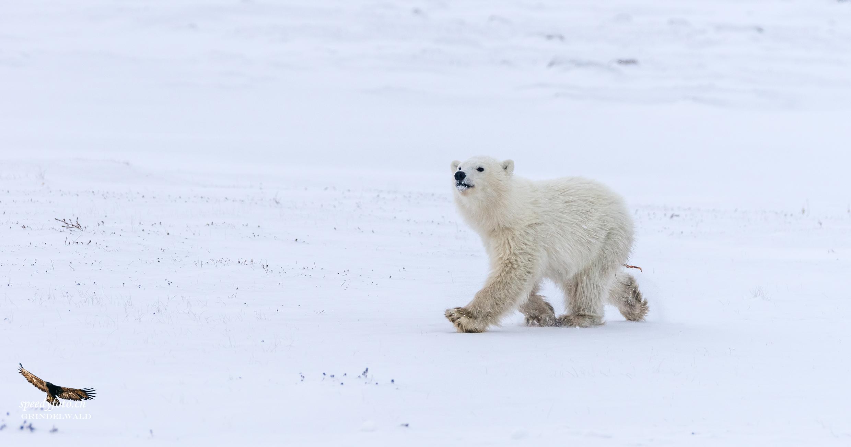 The Arctic world belongs to me...