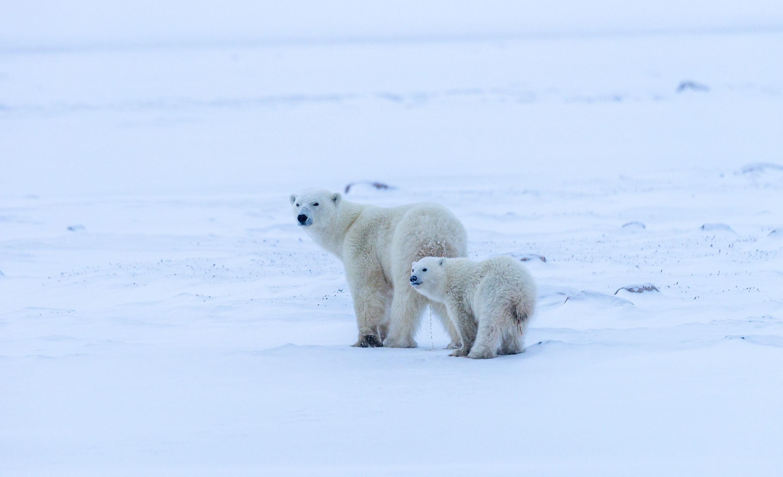 Here we go! Arctic Canda