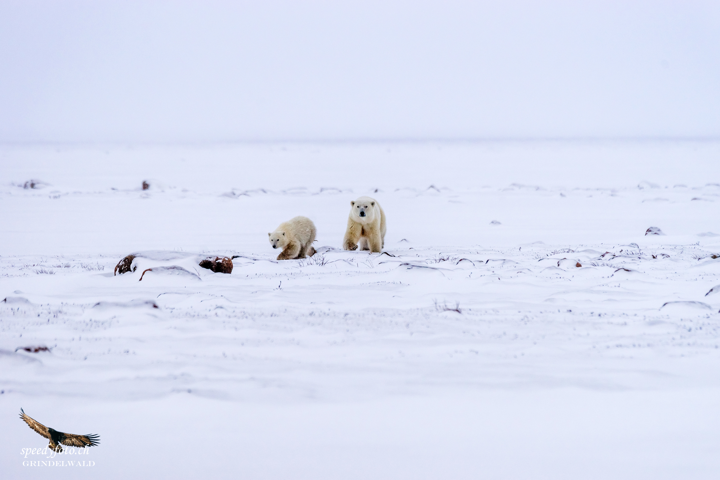 On their way - Arctic Canda