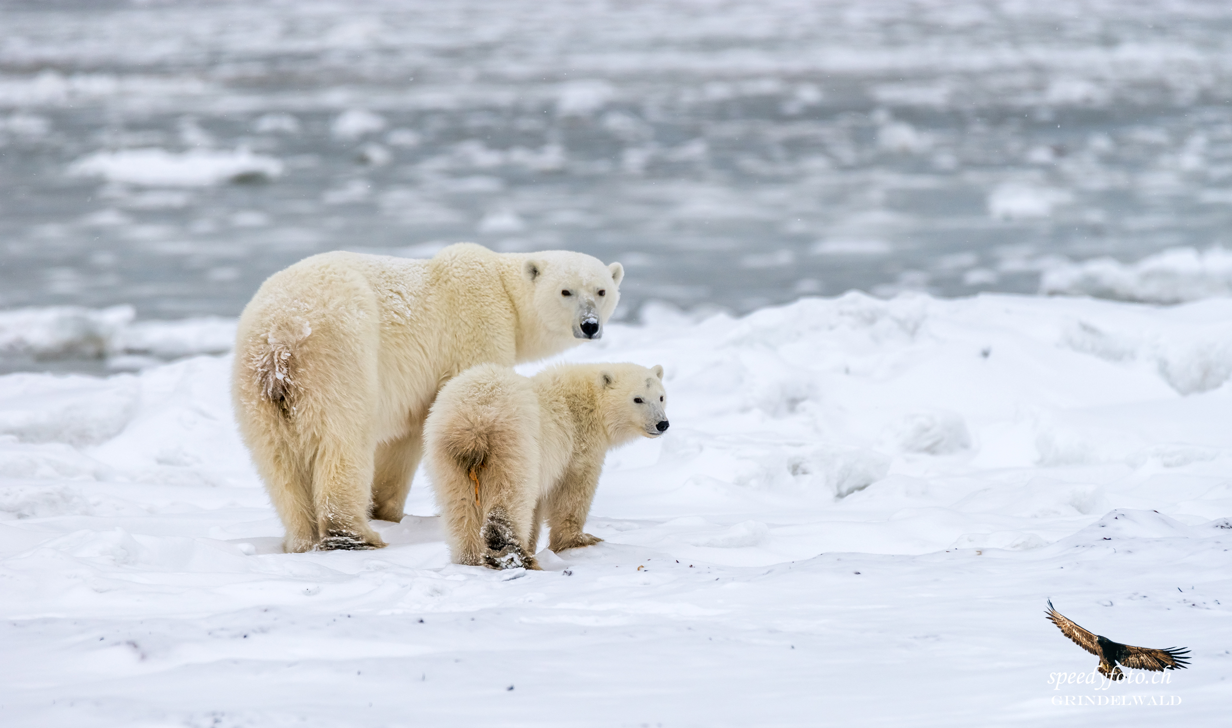 Let's go - dont worry - Arctic Canada