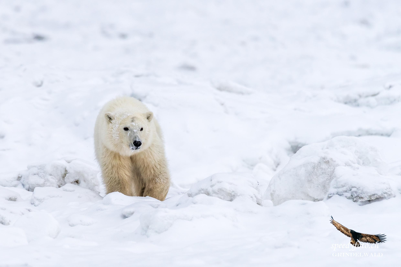 coming closer - Arctic Canada