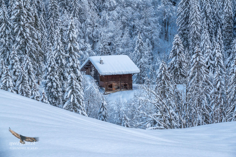 Im Märchenwald - Grindelwald