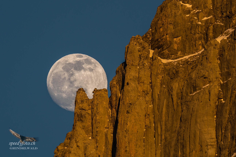 Moon Showcase - Wetterhorn