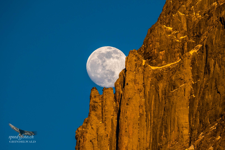 Balanceakt - Wetterhorn - Moonrise